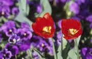 flowers paysage de                   Dalhia65 provenant de Photo fleurs