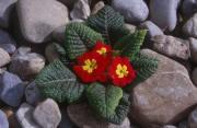 flowers paysage de                   Edna90 provenant de Photo fleurs