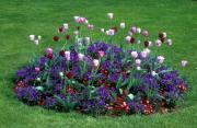 flowers paysage provenant de Photo fleurs