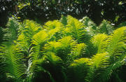 leaves paysage provenant de Photo pierre