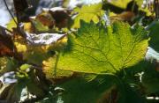 leaves paysage provenant de Photo feuilles
