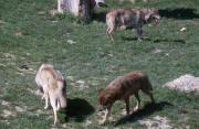 zoo paysage provenant de Photo animaux