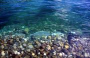 water paysage provenant de Photo eau